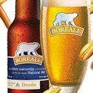 Boréale-Dorée